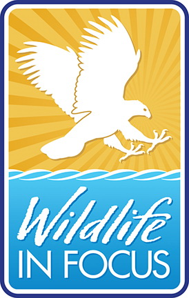 Wildlife in Focus Logo AA